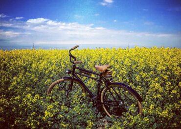 Wielkopolska promuje turystykę rowerową na targach w Holandii