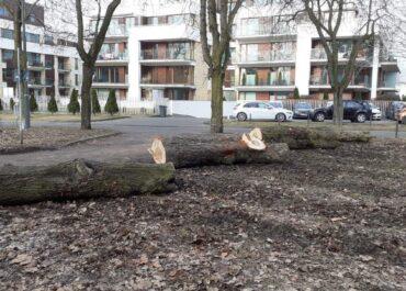 Kłody rzucone pod koła – ZZM ustawił przeszkody, które mają uniemożliwić nielegalne parkowanie wokół Cytadeli