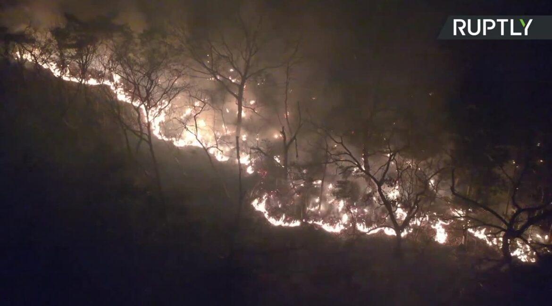 Pożary lasów w Japonii. Ewakuowano mieszkańców kilkudziesięciu domów