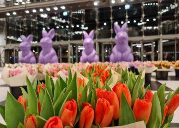 22000 tulipanów czeka na Was w Starym Browarze