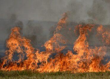 Pozytywne skutki wypalania traw to mit, a rolnik może zapłacić za to wysokie kary