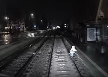 Kobieta spadła na torowisko pod nadjeżdżający tramwaj. Niebezpieczną sytuację nagrał motorniczy