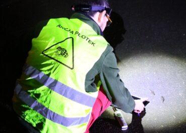 Kierowcy w Poznaniu muszą uważać na żaby