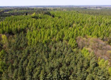 Wzrasta zagrożenie pożarowe lasów