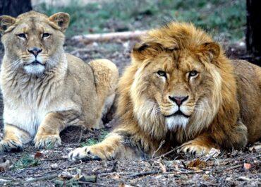 Zoo Poznań oficjalnie właścicielem Kizi i Leosia