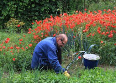 Co dalej z ogródkami przydomowymi na Żelaznej?