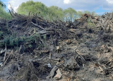 Korzenie usuniętych drzew zalegające na Junikowie zachęcały dzieci do niebezpiecznych zabaw