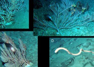 Poznańscy naukowcy rozwiązali zagadkę dewońskich koralowców